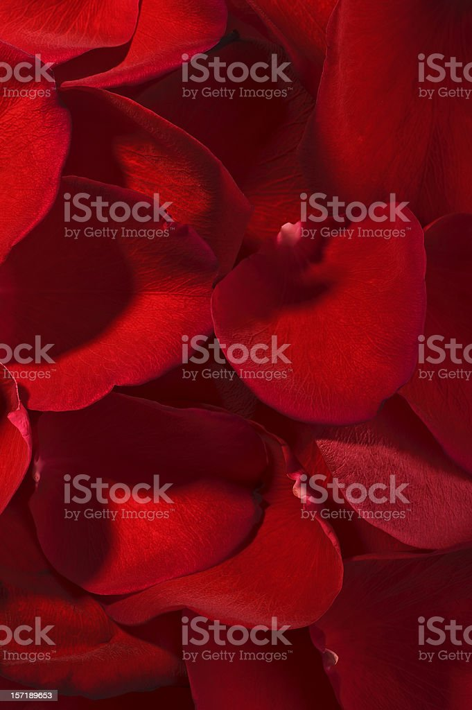 Background of petals royalty-free stock photo