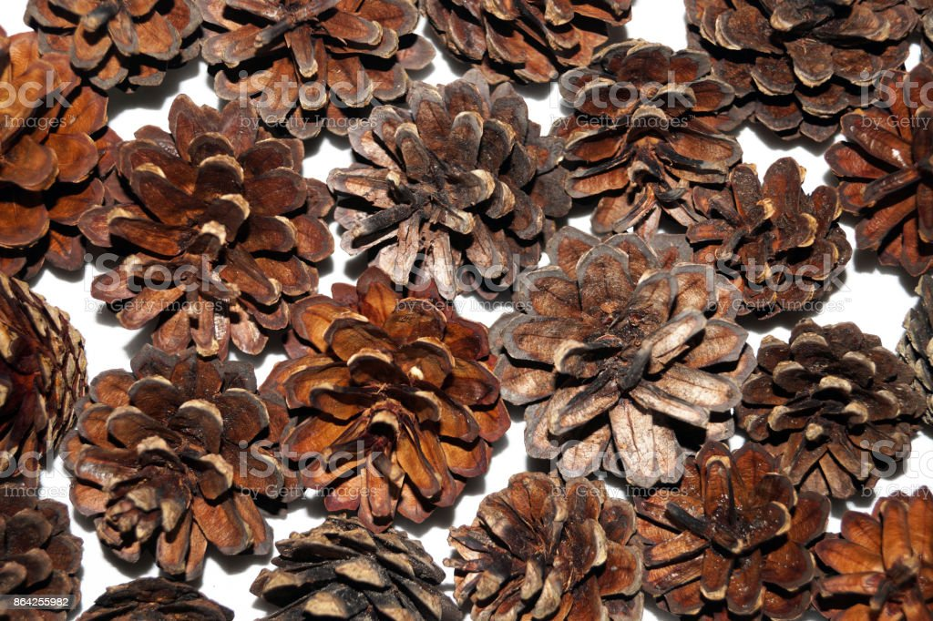 Background of pine cones royalty-free stock photo