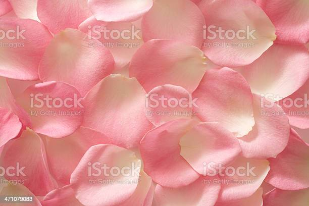 Background of pink and white rose petals picture id471079083?b=1&k=6&m=471079083&s=612x612&h=or7f1pzwsfext2gsiifc 3fff8nxalhbp7nq pbqf5y=