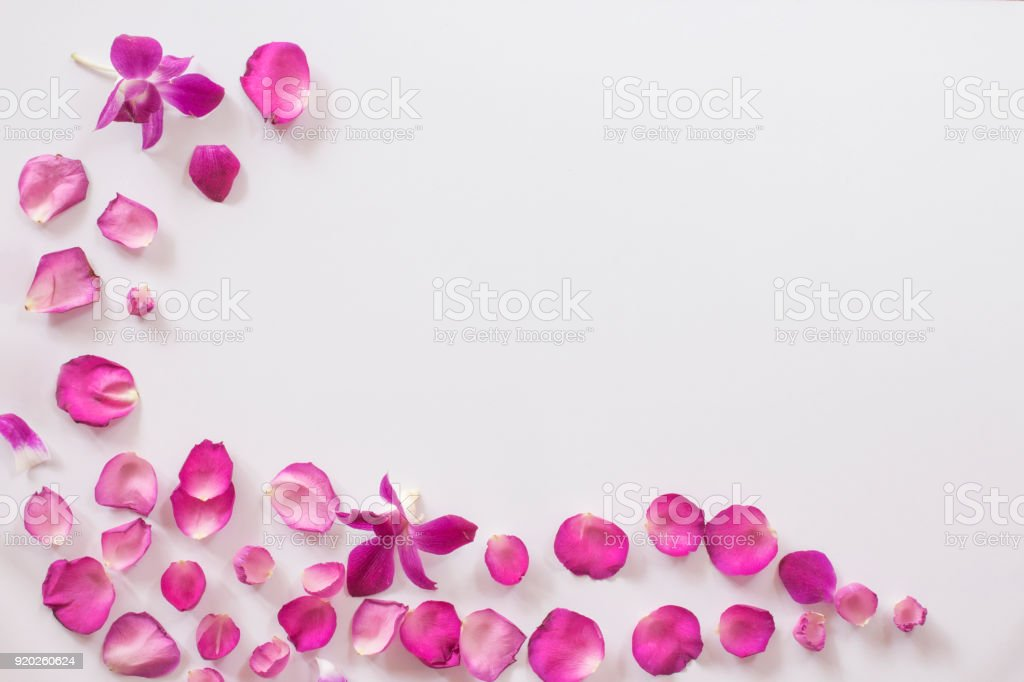 background of pink rose petals and orchid Flower. top view, stock photo