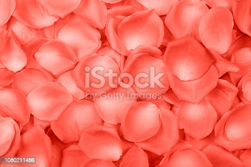 istock Background of pink rose petals. Top view. 1080211486