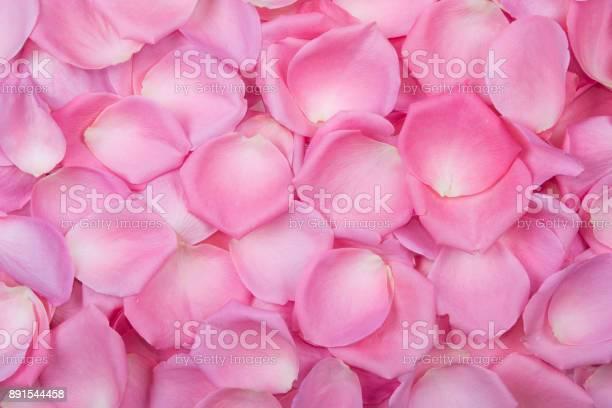 Background of pink rose petals top view picture id891544458?b=1&k=6&m=891544458&s=612x612&h=0rnrmgufziaqiovm svrshqbhpjptsoidqvb4srayc8=