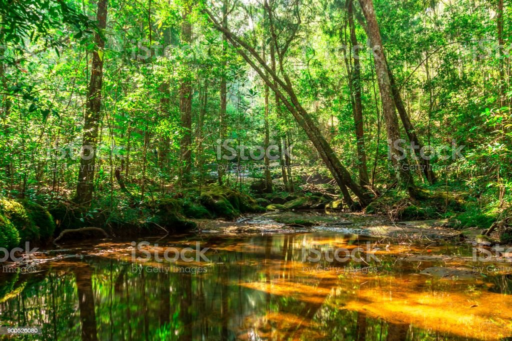 Background of rainforest and dry river stock photo