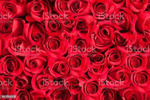 Background of red roses picture id641354376?b=1&k=6&m=641354376&s=612x612&h=yni3gnesoytmajsbu2jg9bnzveu9fpmif9e sqbc9eo=