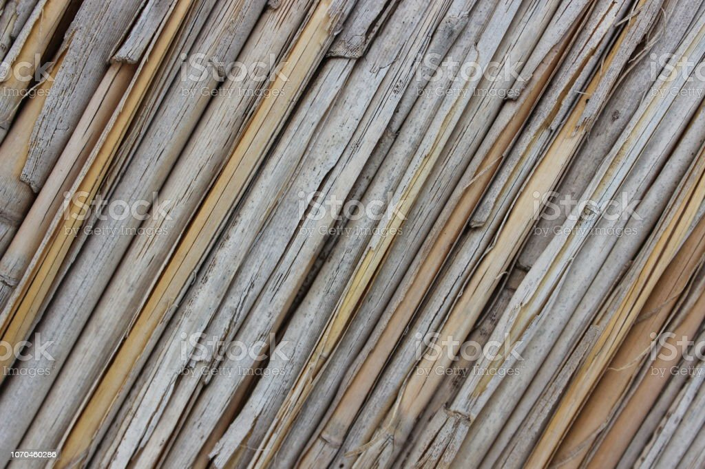 Background of reeds stock photo