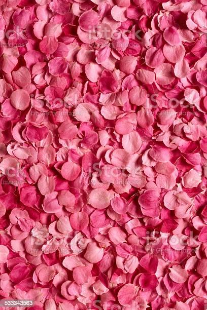 Background of rose petals picture id533343563?b=1&k=6&m=533343563&s=612x612&h=wyzbfd2fwkdhbxts0c8h3h0efmqolrg4h wsapdugs0=
