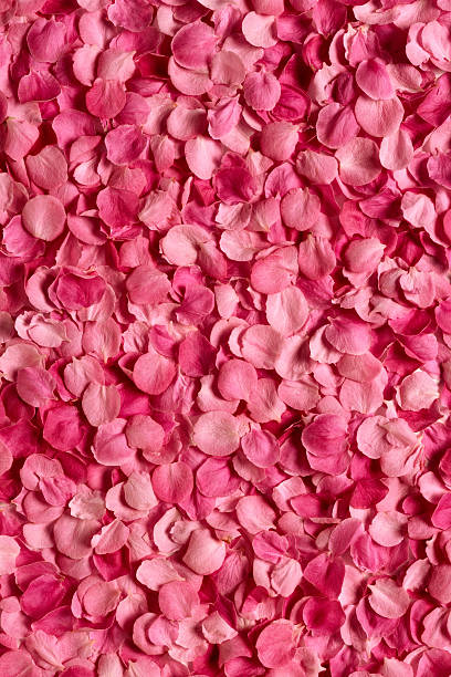 background of rose petals - rose petals stock pictures, royalty-free photos & images