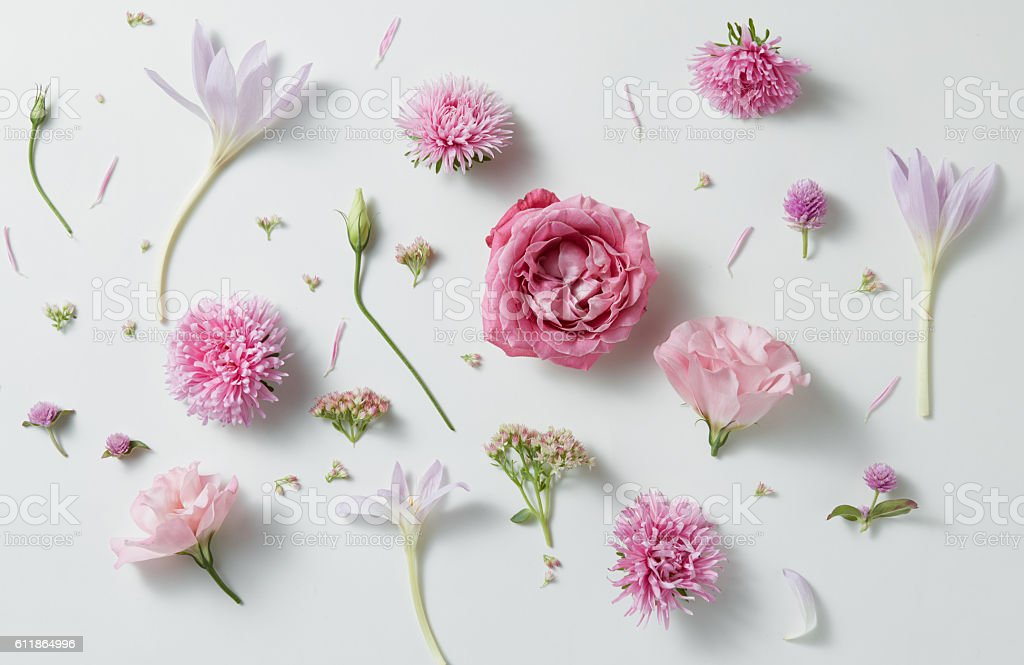 background of roses stock photo