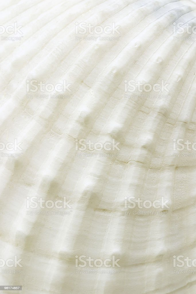 Background of sea shell surface texture royalty-free stock photo