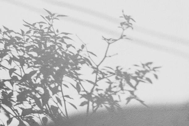 白い壁に影葉の背景 ストックフォト