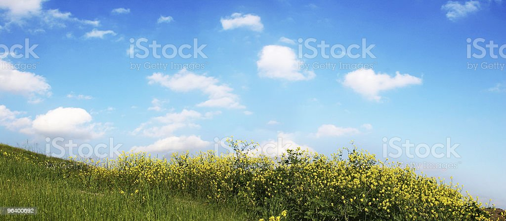Background Of Sky And Grass - Royalty-free Agricultural Field Stock Photo