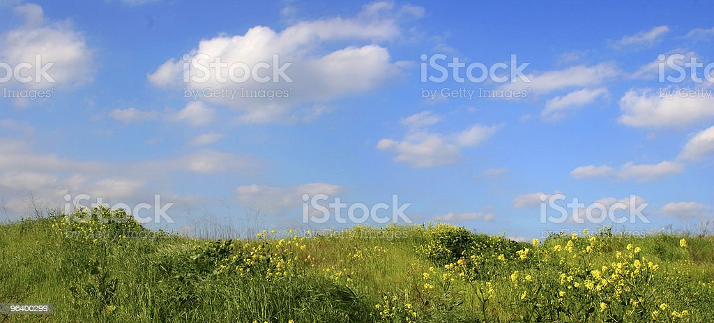 Background Of Sky And Grass - wide view - Royalty-free Agricultural Field Stock Photo