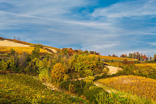 Background of sky on the soft hillside vineyards of Piedmont stock photo