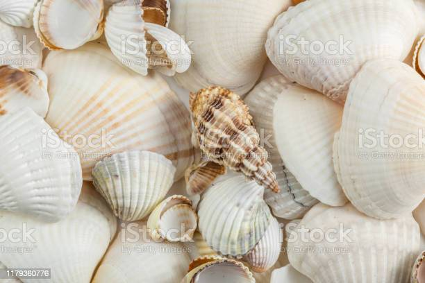 Photo of background of small shells beige shades on a white background.