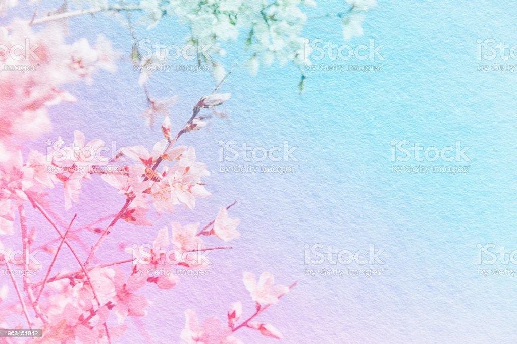 bakgrund av våren vit körsbär blommar trädet med textur. - Royaltyfri Bild Bildbanksbilder
