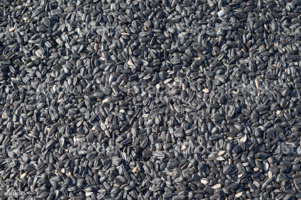 Background of sunflower seeds stock photo