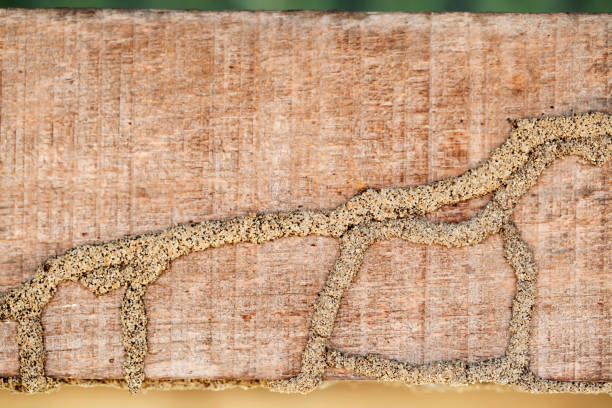 background of termite texture on wooden panel with copyspace. background of termite texture on wooden panel with copyspace. termite stock pictures, royalty-free photos & images