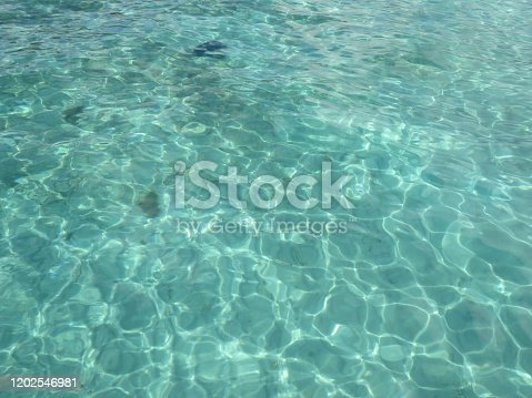 Background of transparent and turquoise waters with aquatic vegetation. Idyllic Caribbean landscape.
