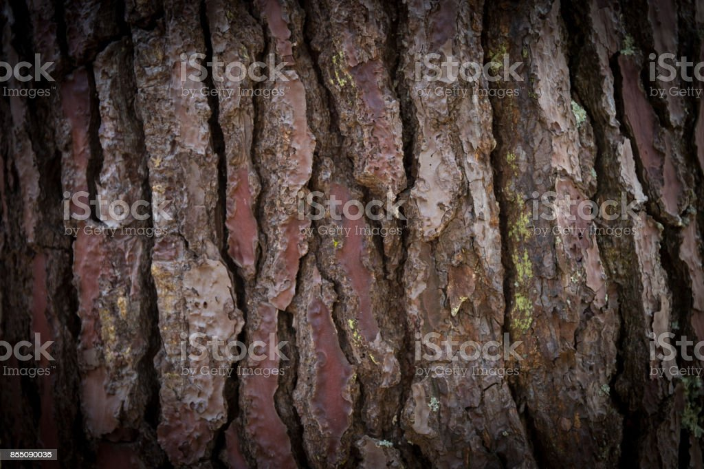 background of weathered wood for design stock photo