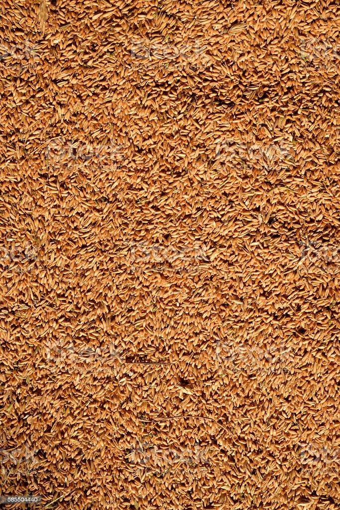 Background of wheat lying stock photo