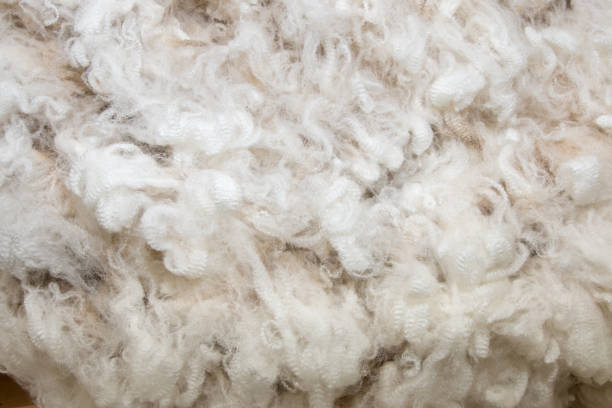 Background of white merino wool Background of white merino wool merino sheep stock pictures, royalty-free photos & images