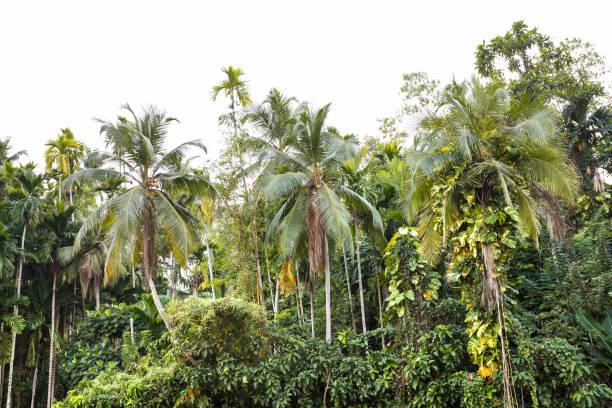 background palms beach. stock photo