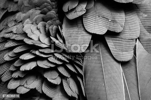 Background pattern of black feathers. Black Feather. Background feather. Feather patterns.