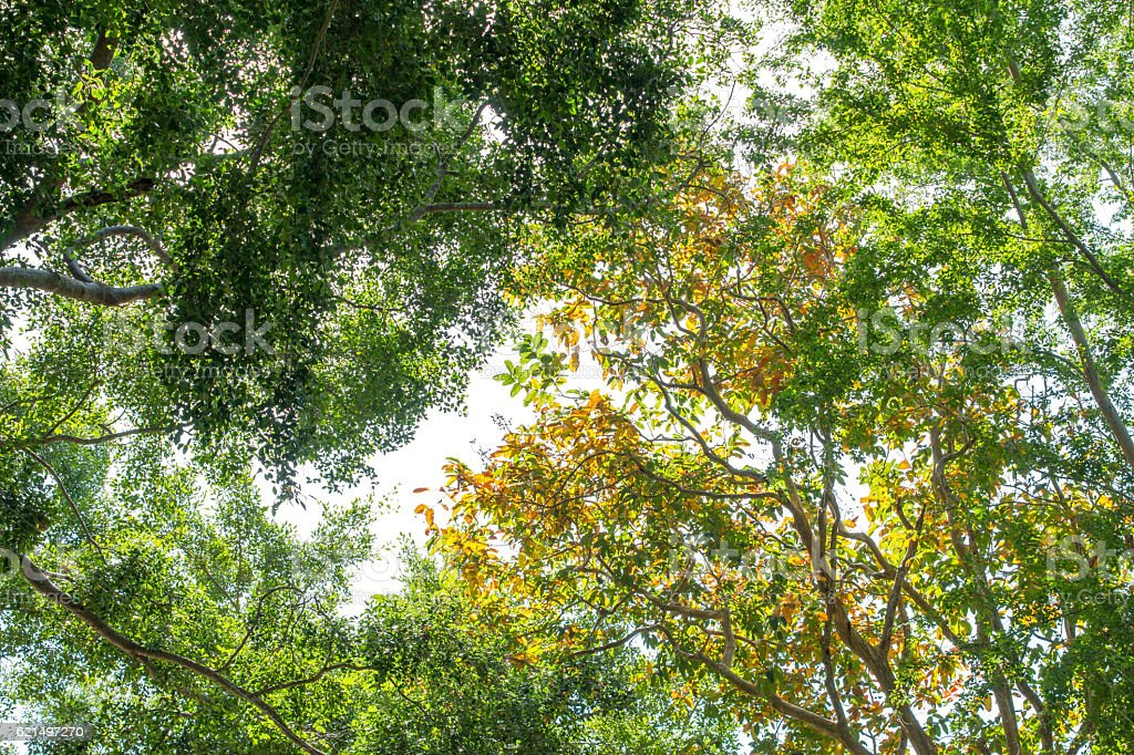 background photo of tree leafs foto stock royalty-free