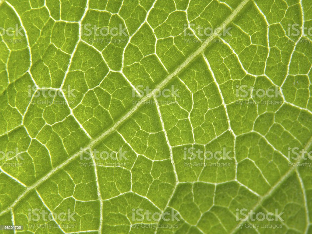 Background Picture of Leaf Texture royalty-free stock photo