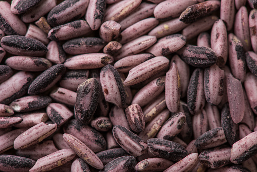 909806032 istock photo Background raw dark red purple rice, close up 949098440