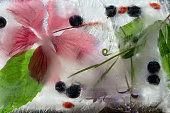 Background    green leaves of mint, berry of blueberry  Wolfberry, Goji berry, flower of red hibiscus    in ice   cube with air bubbles