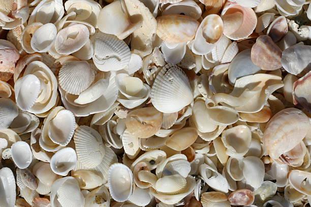 Background - seashells 1 stock photo