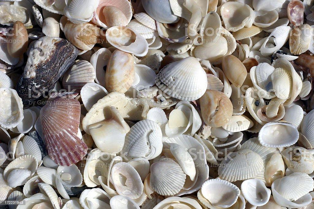 Background - seashells 2 royalty-free stock photo