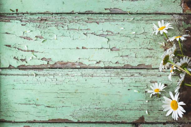 achtergrond lentebloemen. achtergrond lente - madeliefje stockfoto's en -beelden
