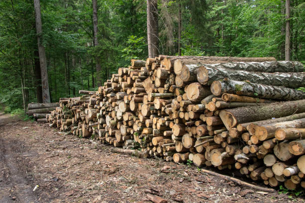 Background stack of logs in the forest, side view. stock photo