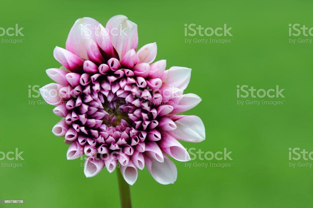 Bakgrunden sommar blomma - Royaltyfri Blomkorg - Blomdel Bildbanksbilder