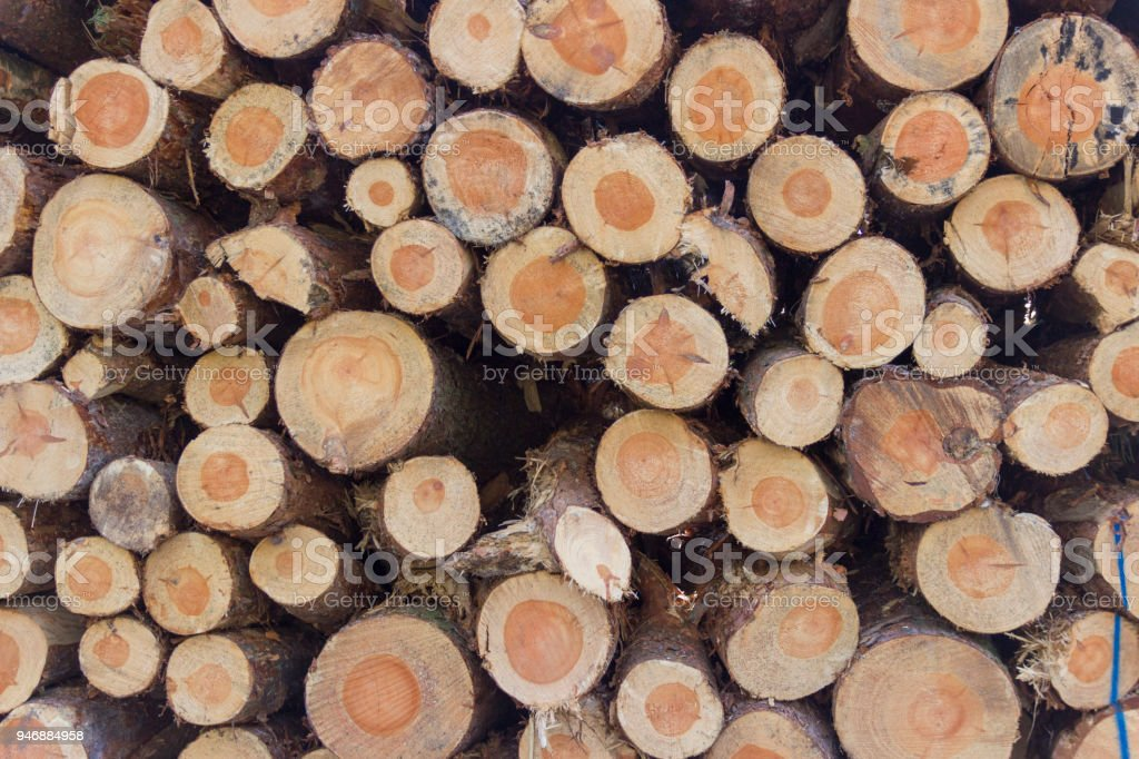 Background texture - end grain of tree trunks stock photo