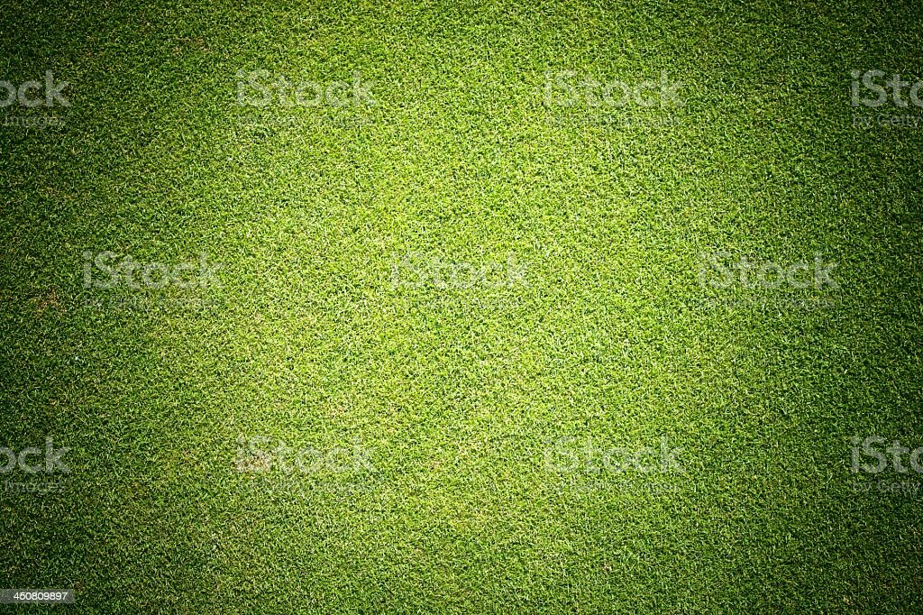 Background texture of green grass stock photo