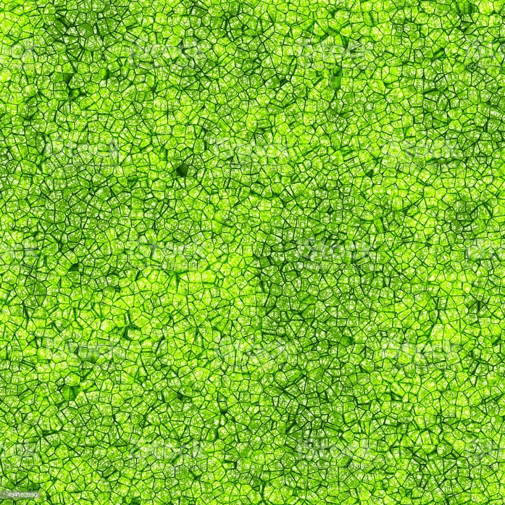 Background texture of leaf with cells stock photo