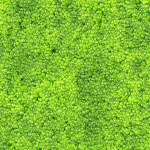 Background texture of leaf with cells illustration of the cells of a leaf plant cell stock pictures, royalty-free photos & images
