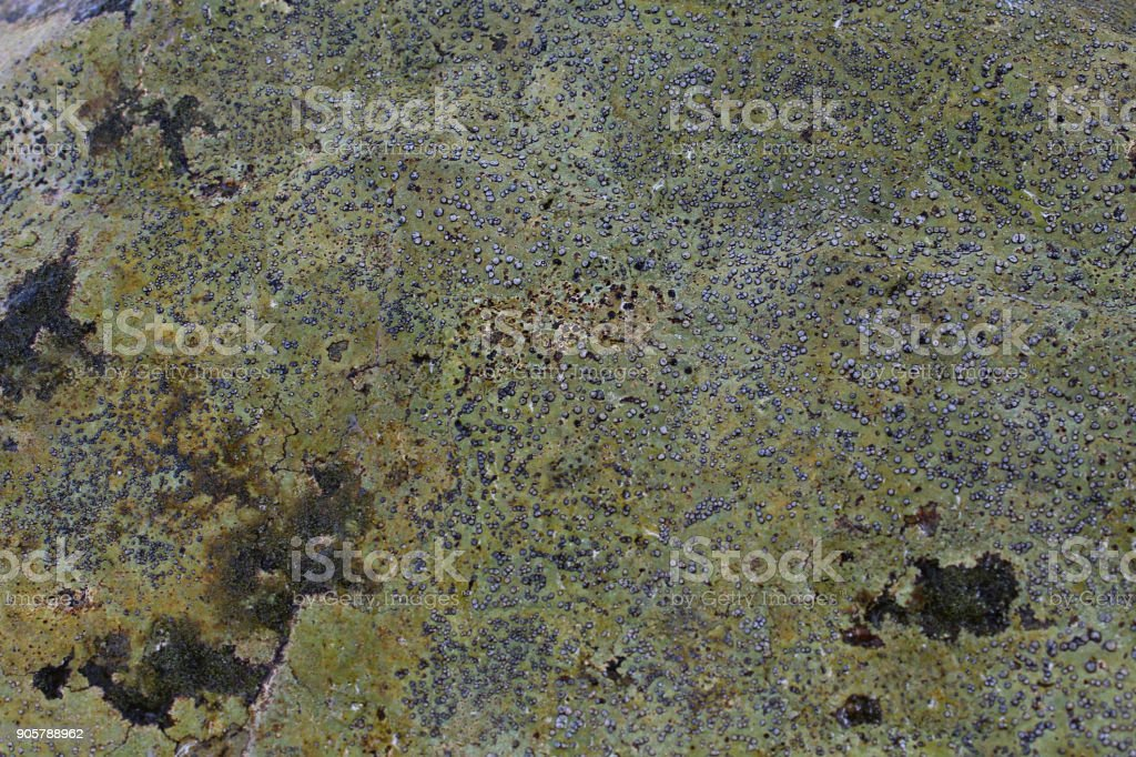 Background Texture of Lichen and Moss on a Stone for Grunge Effects stock photo