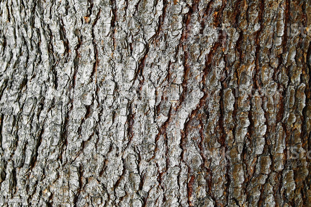 Background texture of tree bark. stock photo