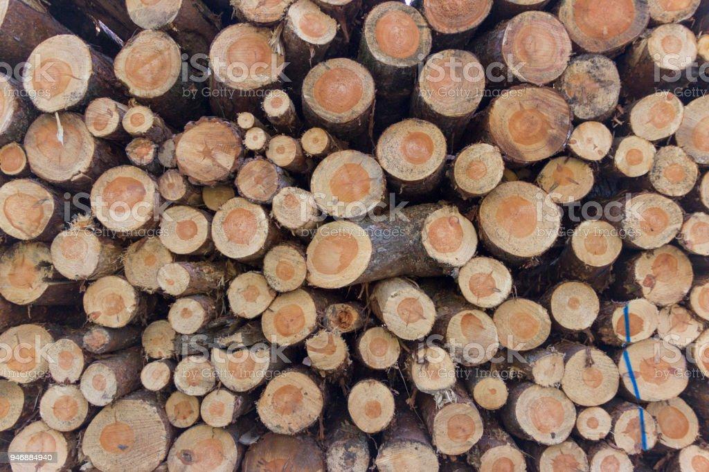 Background texture - tree trunks stock photo