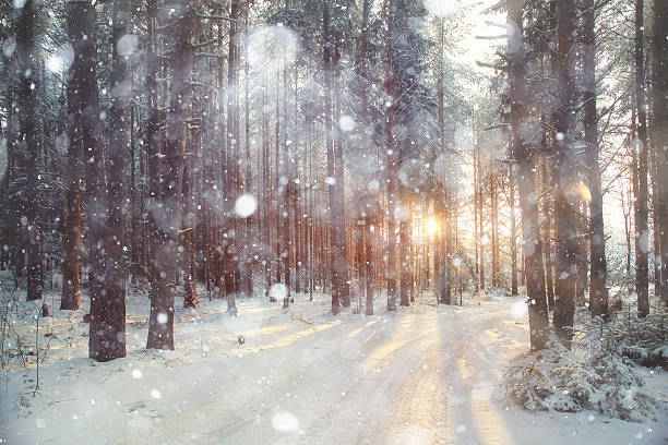 Background winter forest sunny day picture id486813426?b=1&k=6&m=486813426&s=612x612&w=0&h=c u9cz4kdnqrjagv75y06mzqtpmvpwu65kklt5mwqp4=