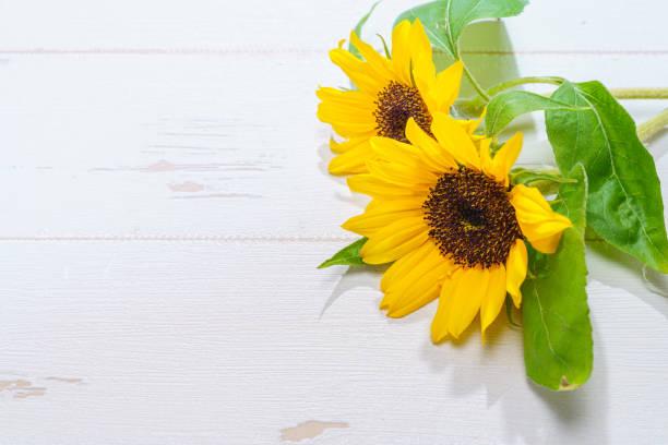 Background with a bouquet of yellow sunflower with leaves picture id1151923647?b=1&k=6&m=1151923647&s=612x612&w=0&h=i239zljanfpjzyuq39qz5z7 c32tqi9 bjytytky17i=
