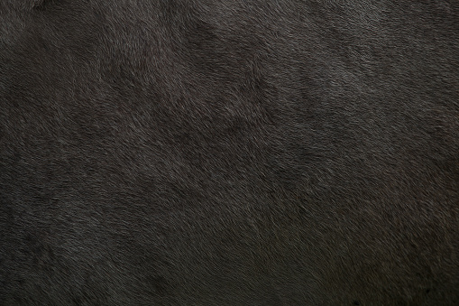 istock Background with a skin animal texture of a cow 1145640853