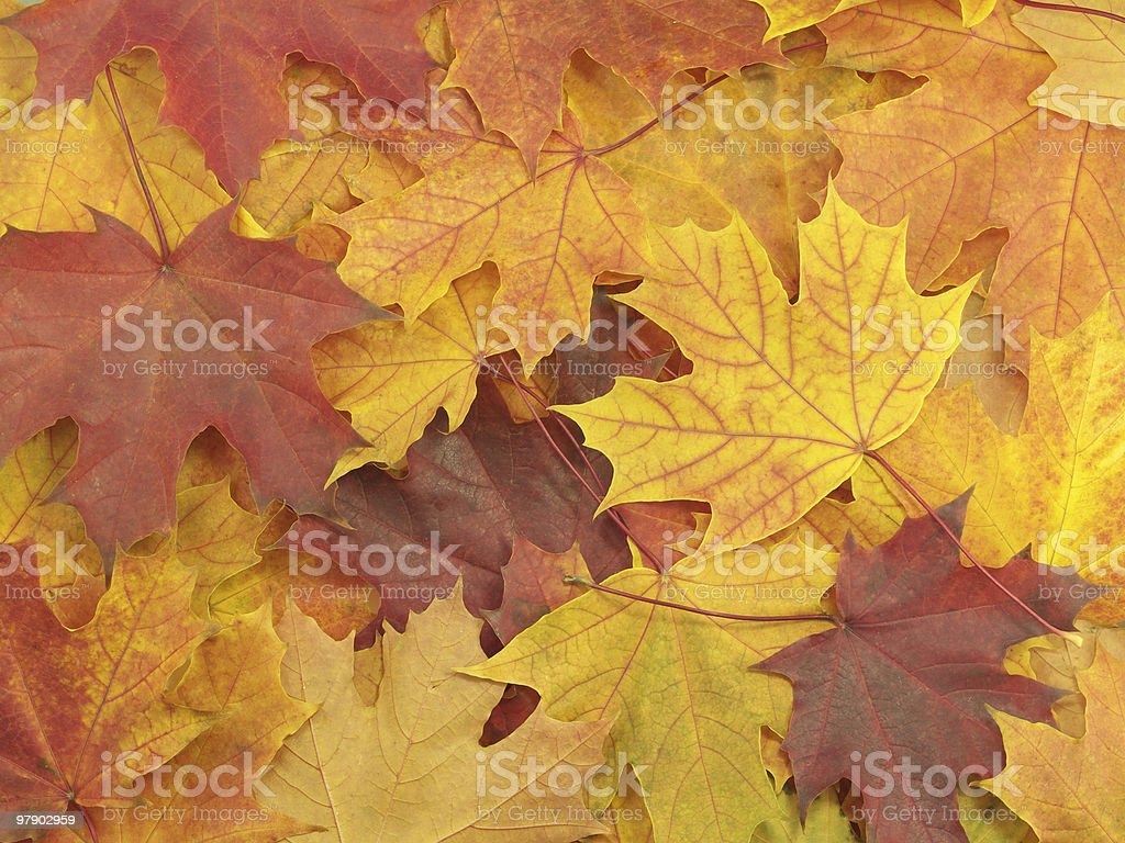 Background with autumn leaves royalty-free stock photo
