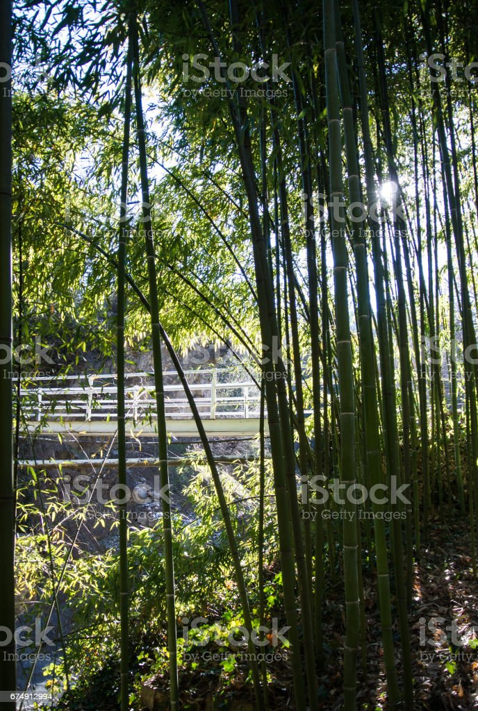 A background with bamboo stems and leaves, a white bridge and the sky at Tbilisi botanical garden, Georgia, Caucasus mountains. royalty-free stock photo