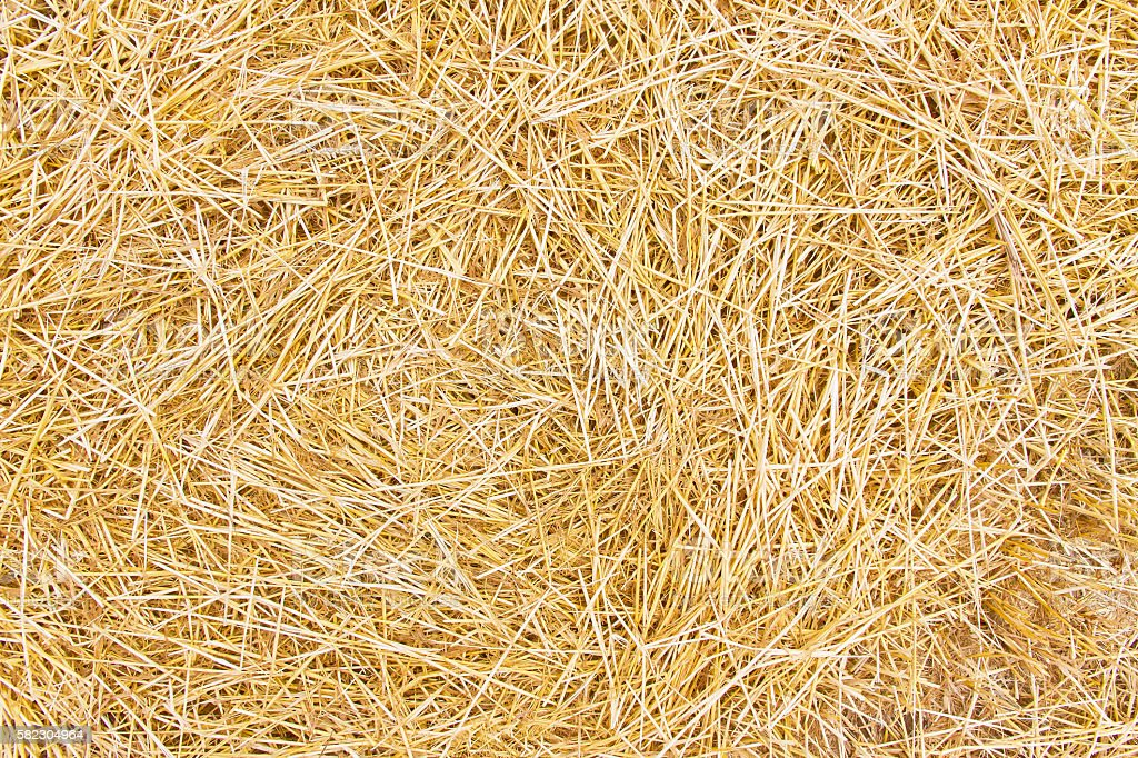 Background with dry straw stock photo