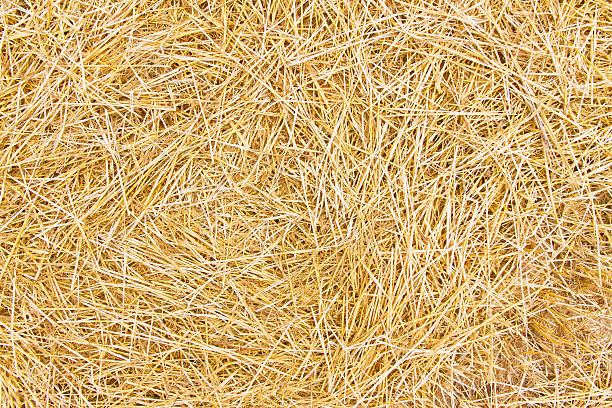 Background with dry straw Background or texture with dry straw hay stock pictures, royalty-free photos & images